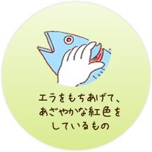 養殖魚のエラが鮮やかな紅色をしているもの
