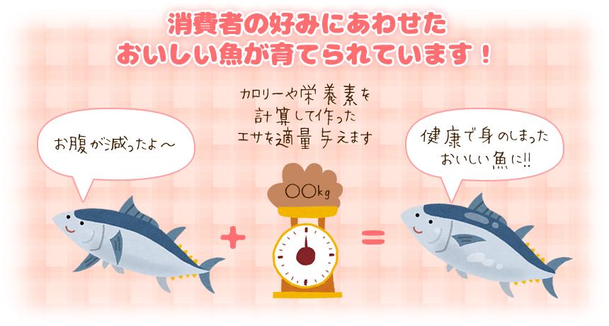 カロリーや栄養素を計算して作ったエサを適量与えることで、健康で身のしまったおいしい魚になります
