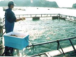 養殖魚の手まき給餌