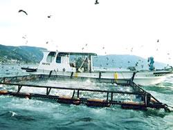 養殖魚の給餌船給餌