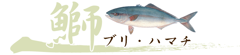 養殖魚ブリ・ハマチのおろし方