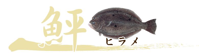 養殖魚ヒラメのおろし方