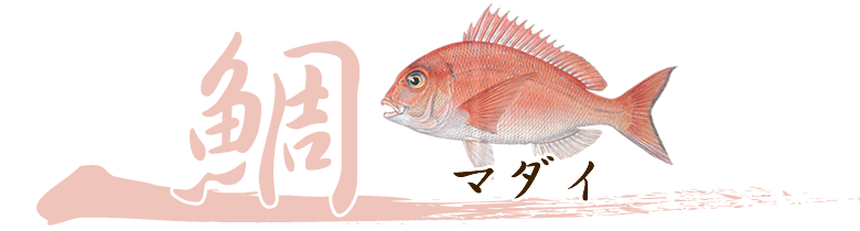 養殖魚タイのおろし方