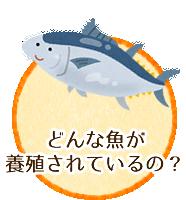 どんな魚が養殖されているの?
