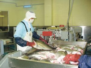 東町漁協の加工場